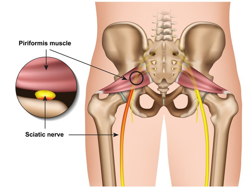 Piriformis Muscle illustration